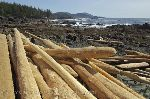 Photo Cape Palmerston BC