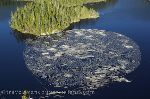 Photo Logging Industry Vancouver Island British Columbia