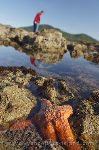 Photo Exploring Tide Pools On Vancouver Island