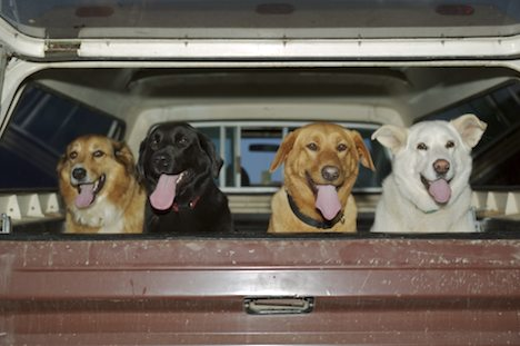 Photo: Cute Dogs Northern Vancouver Island