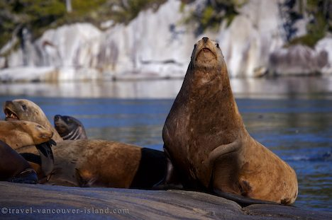Photo: Steller Sea Lion