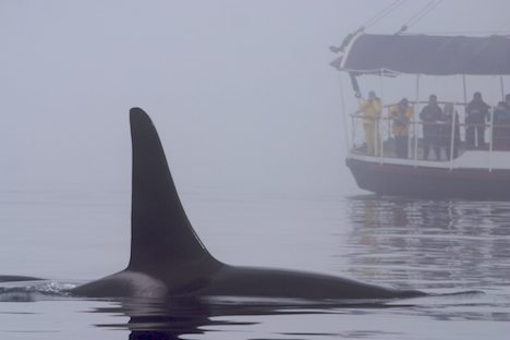 Photo: Whale Watching Tour From Telegraph Cove