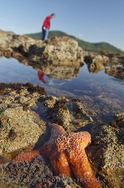 Photo: Exploring Tide Pools On Vancouver Island